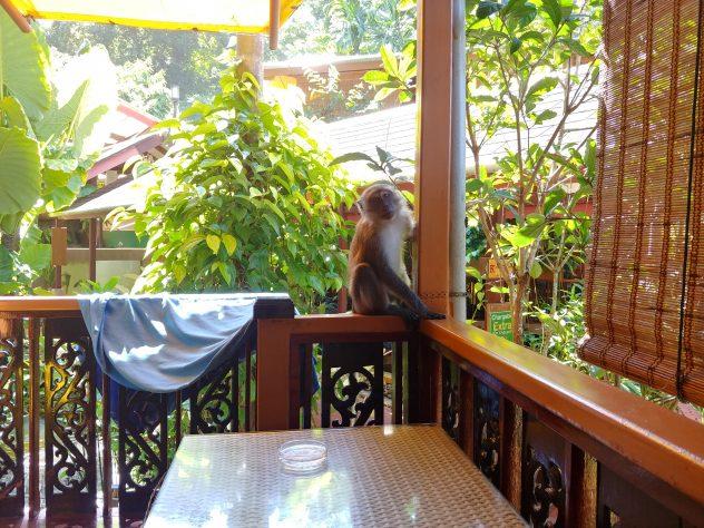 Auf den Spuren der Makaken